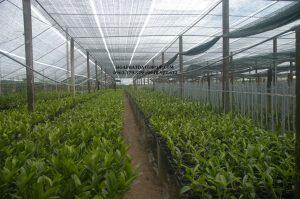 Báo giá cung cấp lắp đặt lưới che nắng, lưới chống nắng rẻ bền tại Huyện Dầu Tiếng